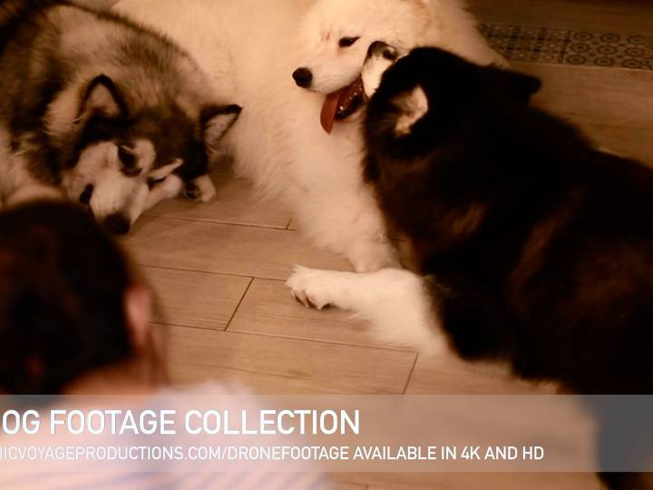 Dog Stock Footage