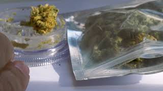 marijuana stock footage